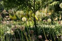 Vandusen Gardens, Vancouver, British Columbia CM11-07