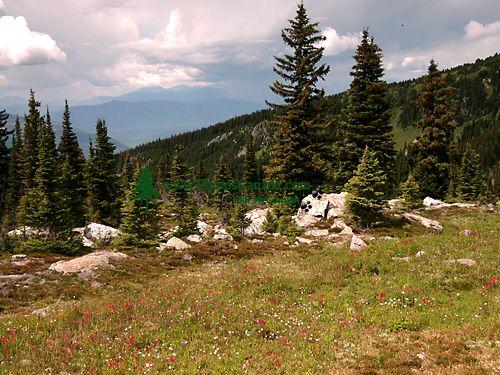 Wells Gray Park, Trophy Mountain Wildflowers, British Columbia, Canada CM11-04