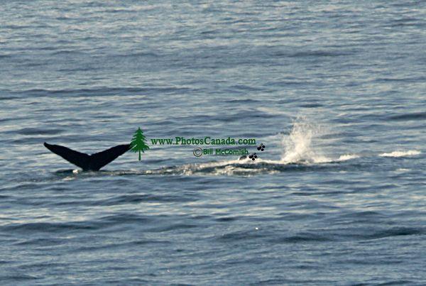 Humpback Whale CM11-04