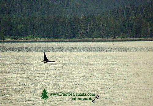 Humpback Whale 05