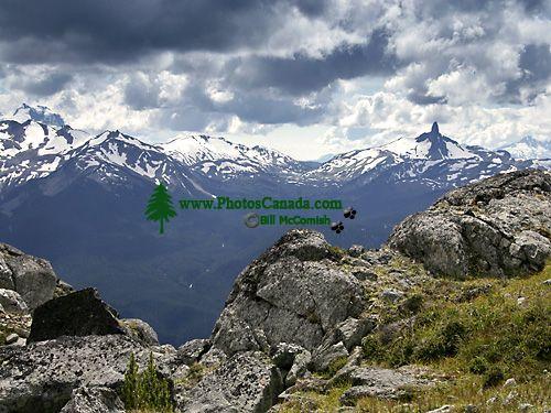 Whistler Alpine, British Columbia, Canada, CM11-06