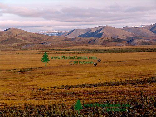Dempster Highway, Yukon, Canada   27