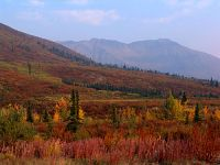 Dempster Highway, Fall Colours, Ogilivie Mountains, Richardson Mountains, Yukon, Canada  23