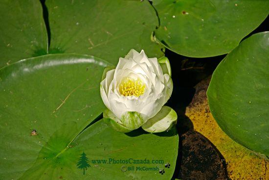 Vandusen Gardens, Vancouver, British Columbia CM11-08